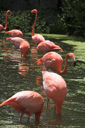 Toronto Zoo 2006