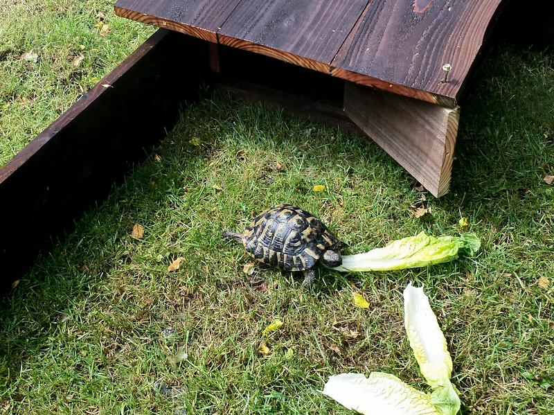 20140627_135149004-Tortoise-270614