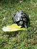 20140627_135502008-Tortoise-270614