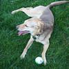 i got the ball!