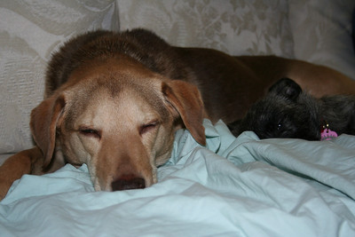 tova, trooper and sophie - new years 2008 - 2009