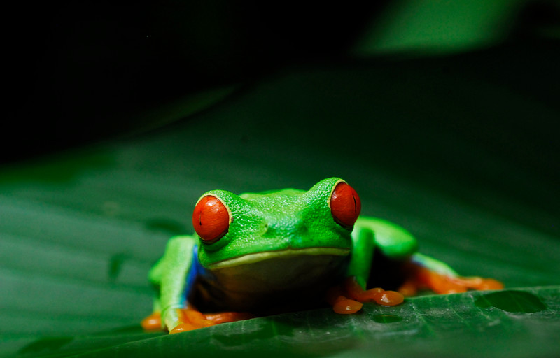 frog_CCC0161