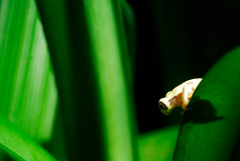 frog_CCC0011 copy