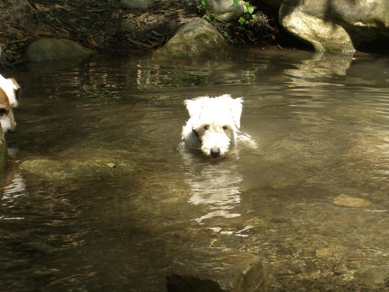 7/15/07 Whitty soaking in San Ysidro Creek, Montecito