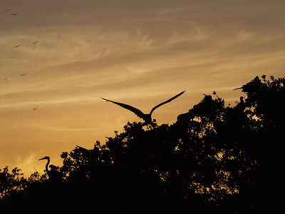 Frigatebirds and Friends and a Sky of Fire