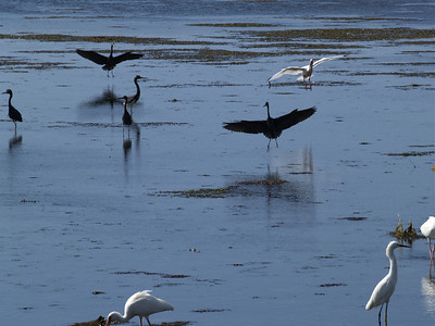 Landing Birds