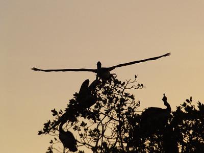 Wings in Sillhouette 1