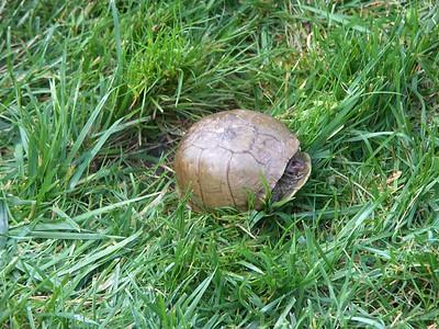 Turtle, 2005