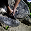 """The first time a new mama turtle arrives on Selingan, they are measured and tagged for future reference and study.<br /> <br /> All print proceeds go to Turtle Foundation, who run sea turtle conservation programmes throughout Indonesia and Borneo.<br />  <a href=""""http://www.turtle-foundation.org"""">http://www.turtle-foundation.org</a>"""