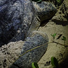 "Mama turtle uses her flippers to cover her eggs with sand, although unbeknownst to her the rangers have already collected them. Not to worry mama, they'll be protected until the hatchlings are ready to return to the sea for their best chance of survival.<br /> <br /> All print proceeds go to Turtle Foundation, who run sea turtle conservation programmes throughout Indonesia and Borneo.<br />  <a href=""http://www.turtle-foundation.org"">http://www.turtle-foundation.org</a>"