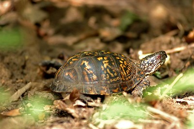 Turtles and other animals