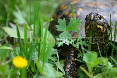 Turtles, Amphibians and Reptile photos