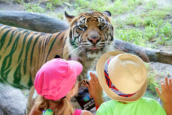 Two Kids And A Tiger