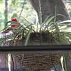 Hubby visiting nest