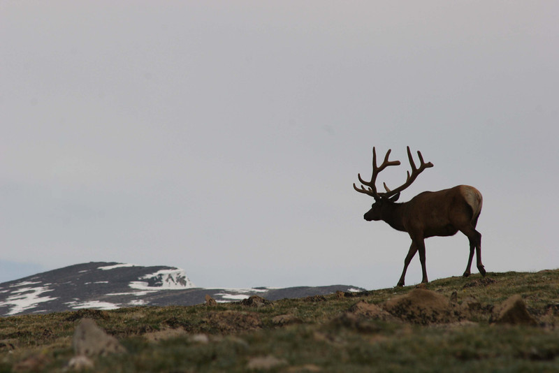 King of the Mountain: Rocky Mountain Trail