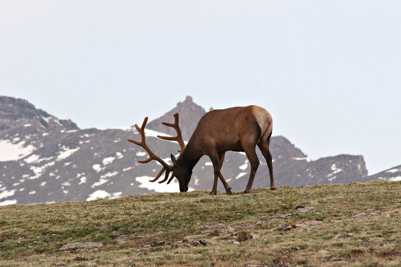 Monarch of the Rockies