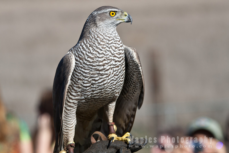 Hawk-6285