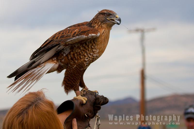 Hawk-6238
