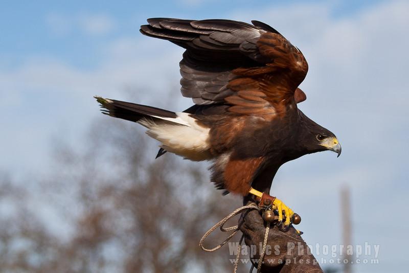 Hawk-6269