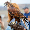 Hawk-6231