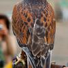 Hawk-6225