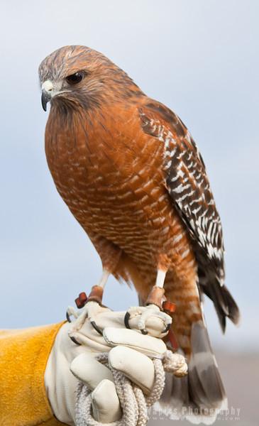 Hawk-6250