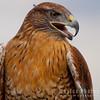 Hawk-6245