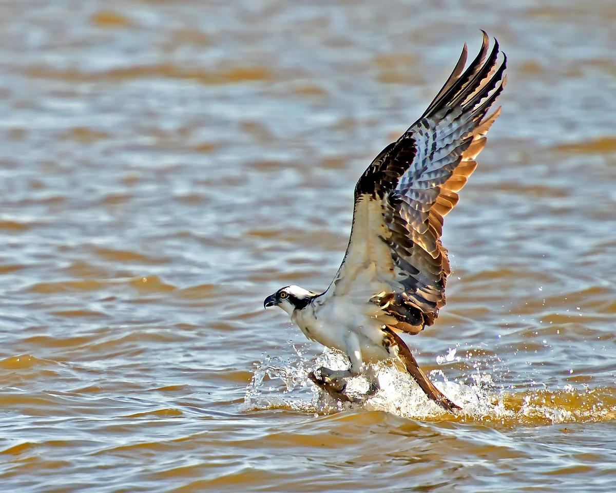 James River Catch