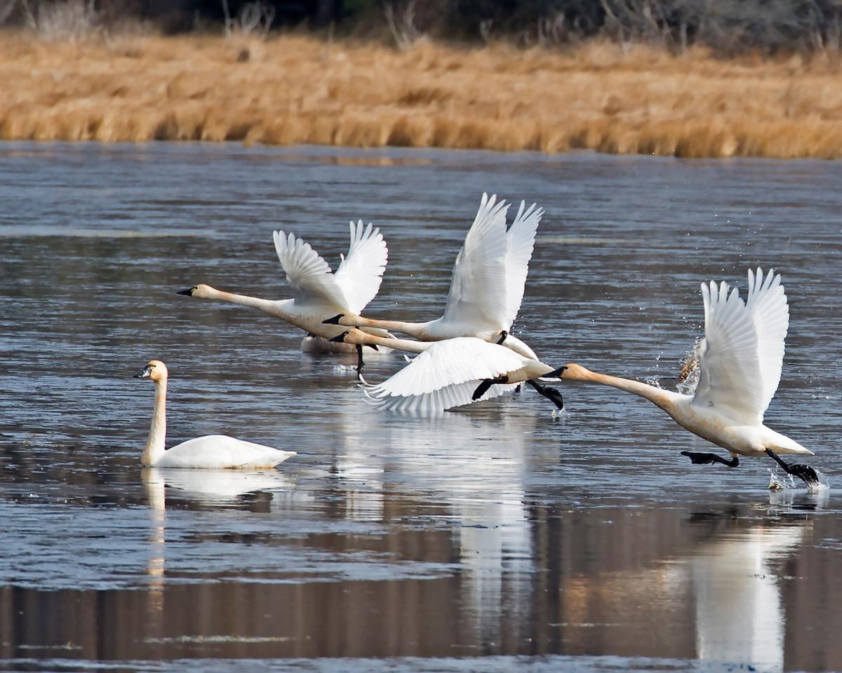 Swan Water Walk