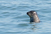 Harbor Seal CBBT boat trip, 2-16-14