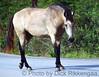 May_27_2012_Horse3