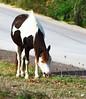 May_27_2012_Horse4