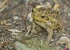 WM_July_22_2012_toad1