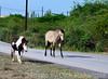 May_27_2012_horse1