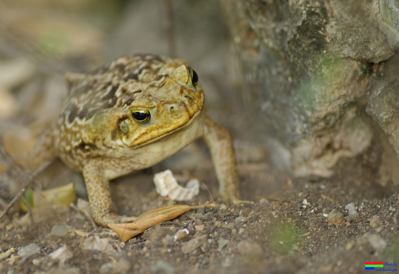 WM_July_22_2012_Toad2