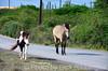 May_27_2012_horse2