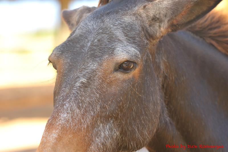 12-30-2013-Horse1