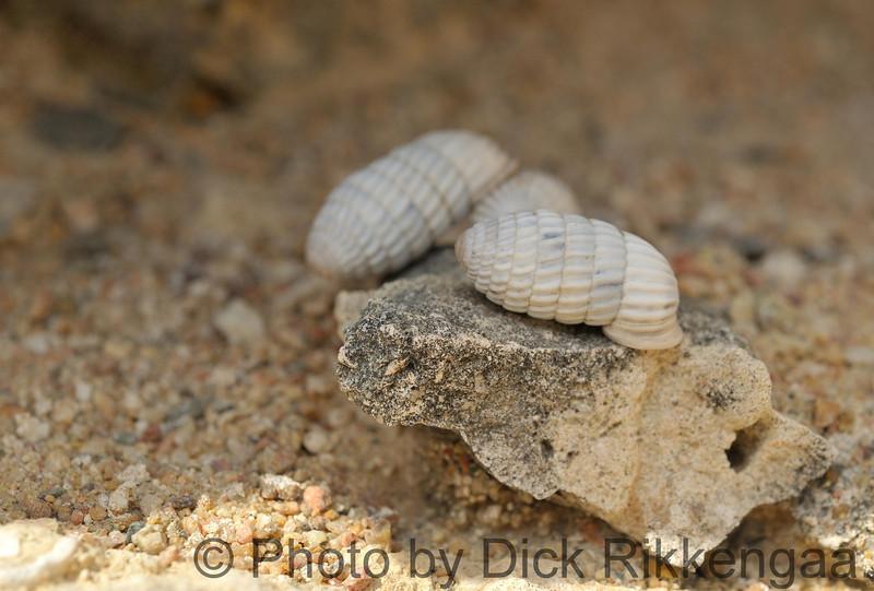 2012-Sept-02-Snail2_025