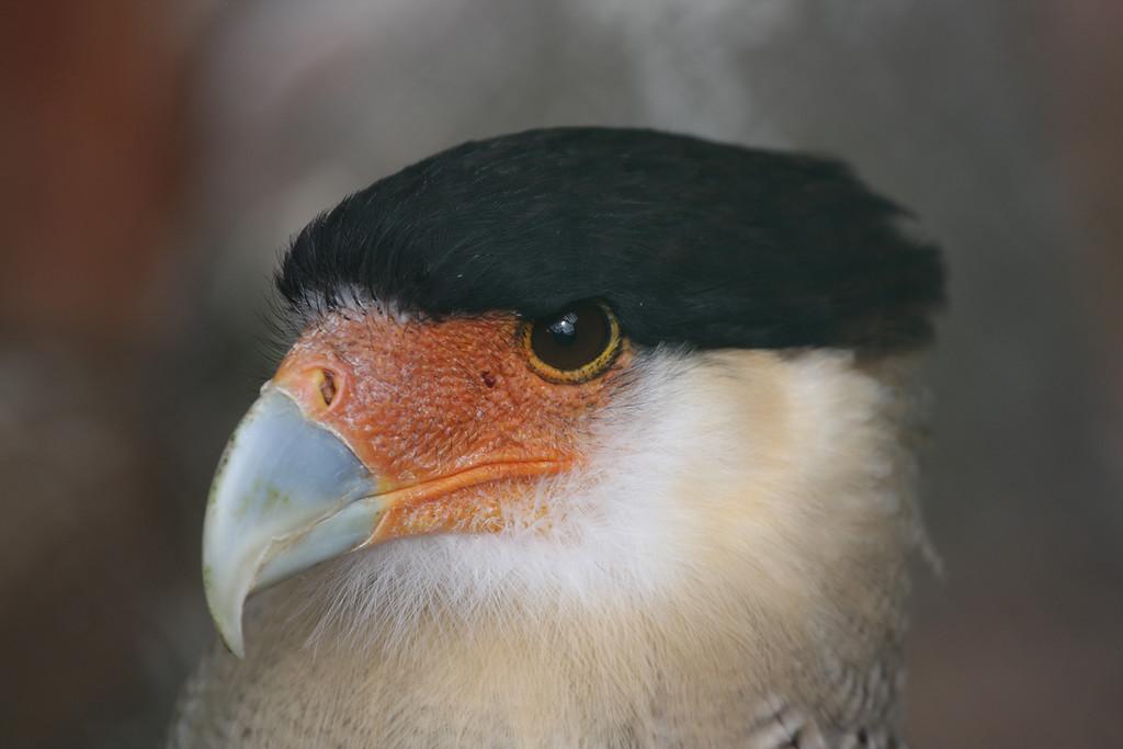 Birds of Prey 162