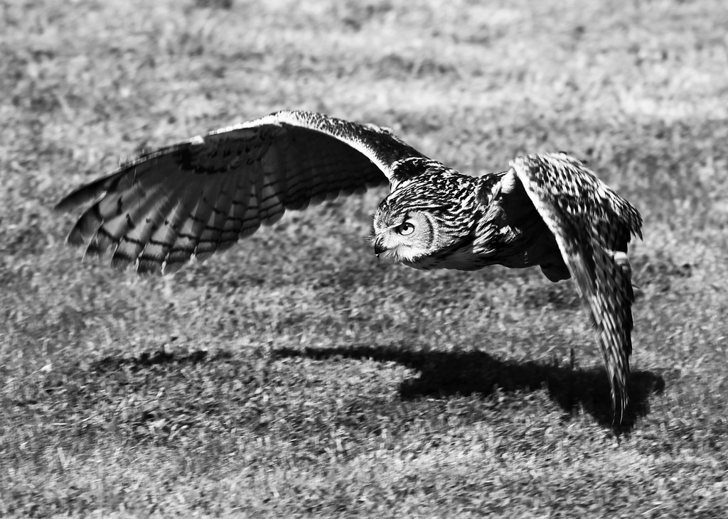 Low Flying 2 B&W