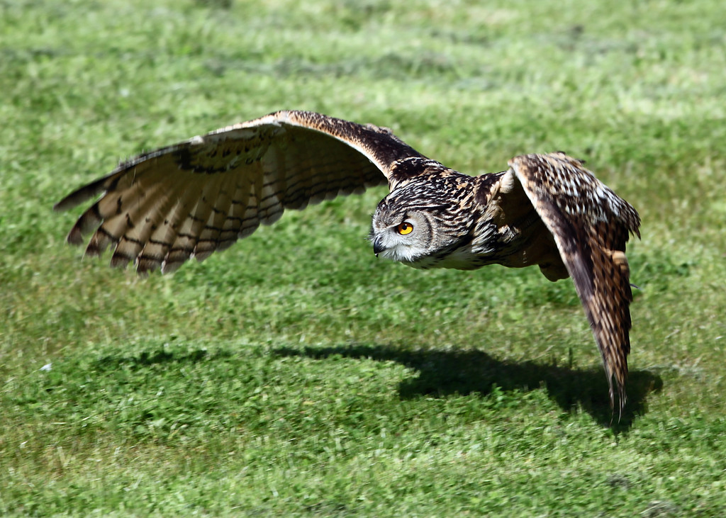Low Flying 2
