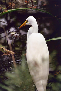 Corkscrew Swamp near Naples Florida