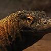 Komodo Dragon - The Houston Zoo