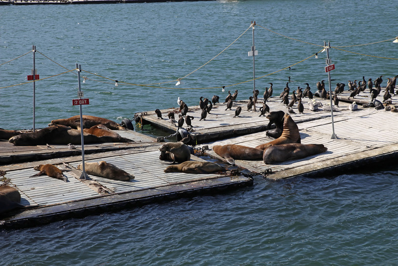 USA 2011 - Sea lions in San Diego, California