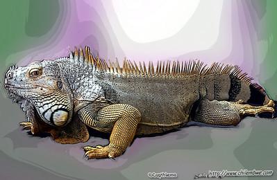 Iguana, Sacramento reptile expo.