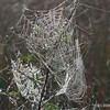 Spider webs in the morning sun