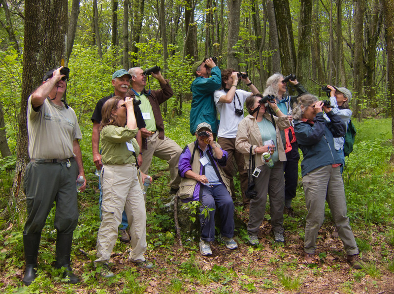 Birders, you know, are easily distracted by birds...<br /> 5/15/11