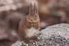 Eekhoorns houden ook van zonnebloempitten