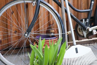 """For at """"Skaderne"""" ikke skal stjæle de ret så dyre nødder er de gemt bag ved cykel og haveredskaber"""