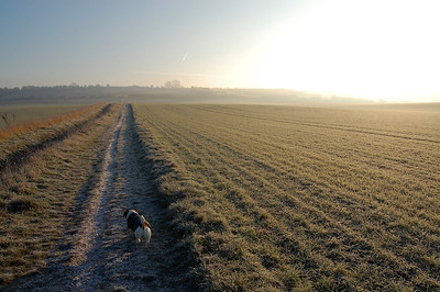 Heading across frosty and misty fields towatrds Lincoln Edge